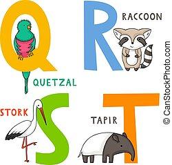 alphabet, s, t, animal, r, q