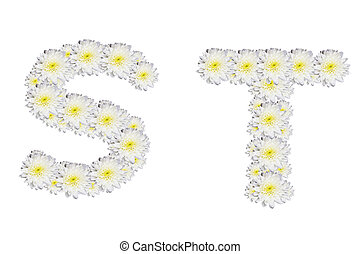 alphabet ST , White Flower isolated on white background
