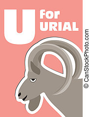 alphabet, u, urial, tier