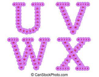 Alphabet U V W X, Cosmos flower alphabet isolated on white