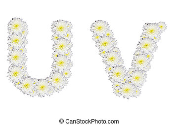 alphabet UV , White Flower isolated on white background