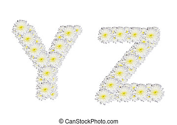 alphabet YZ , White Flower isolated on white background