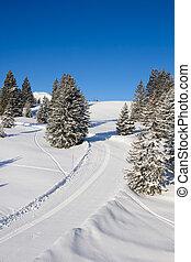 alpi, sciare