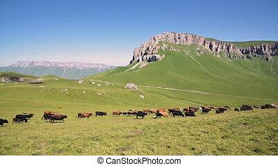 alpin, concept, ensoleillé, plateau, pied, caucase, nord, ...