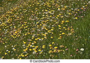 alpin, fleurs, #4