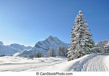 alpin, scenery., braunwald, schweiz