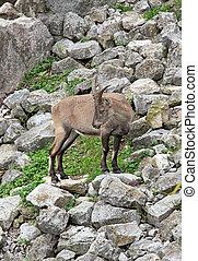 alpina getter