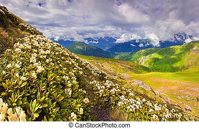 alpine enge, ind, den, caucasus, bjerge.