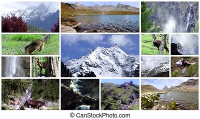 alpine fauna montage - collage of animals living in the alps