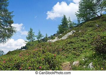 alpine flora - alpine landscape on summer with rhododendron ...