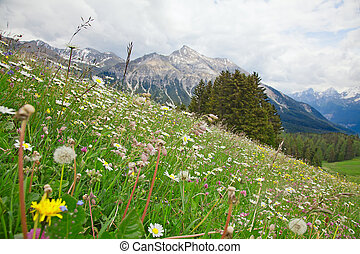 Alpine flowers in swiss alps