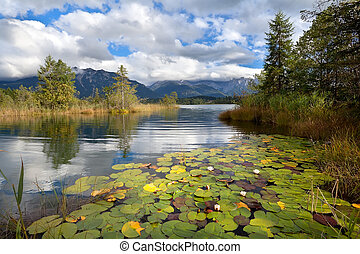 alpine lake Barmsee with water lily flowers