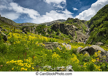 Alpine landscape - Green and yellow alpine blooming meadow...