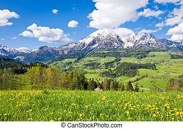 alpine landscape in the springtime