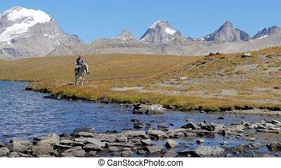 alpine landscape with horseman - man riding a beautiful...