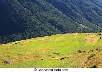 Alpine meadow. Alps, Northern Italy. - View on beautiful ...