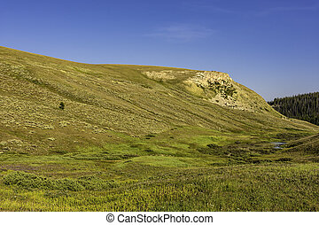 Alpine Meadow Bighorn National Forest Wyoming USA