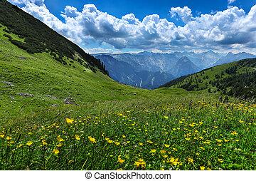Alpine meadow flowers summer mountain landscape. Austria, Tirol, Achensee Area.