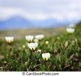 Alpine meadow in Jasper National Park