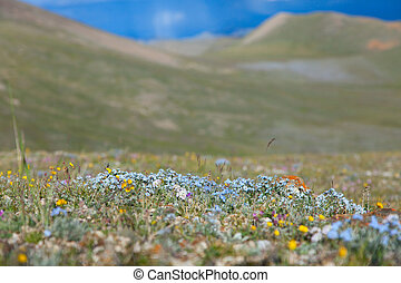 Alpine meadow in the summer