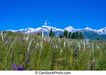 Alpine meadow on a background of snowy mountains