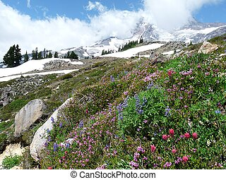 Alpine Meadow on Mount Rainier
