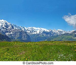 Alpine Meadow - Alpine meadow in the Swiss Bernese Oberland...