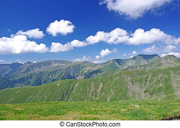 Alpine meadow in Fagaras mountains, Romania.