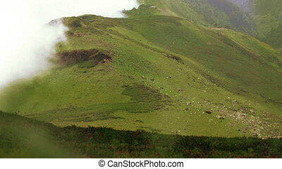Alpine meadow Timelapse - Timelapse Alpine meadows at top of...