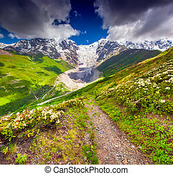 Alpine meadows at the foot of Tetnuldi glacier, Chkhutnieri...