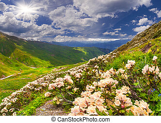 Alpine meadows in the Caucasus mountains.