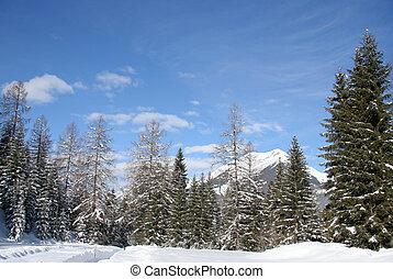 Alpine mountain treeline - Alpine fir trees against blue ...