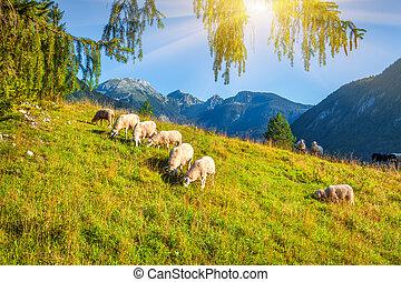 Alpine pastures in the Slovenian. Julian Alps. Triglav...