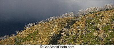 Alpine Ridgeline #2 - Mt Hotham, Victorian Alps. Victoria,...