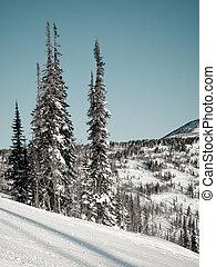 Alpine skiing slope
