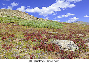 Alpine tundra in autumn colors