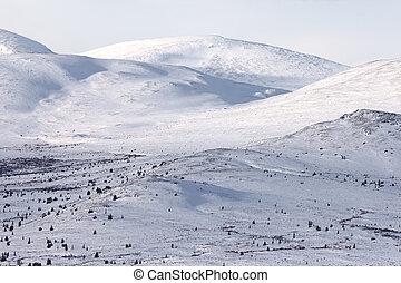 Alpine tundra in winter, Yukon Territory, Canada.