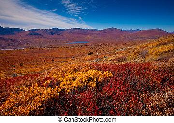 Alpine tundra - Fall-colored alpine tundra, Yukon Territory,...