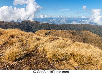 alpine tussock growing on mountain range in Paparou National...