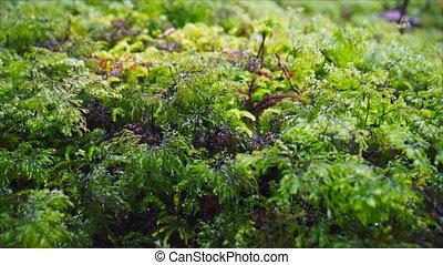Alpine vegetation plants close up - Alpine vegetation with...