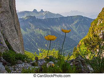 Alpine wild flowers at Rocher de Naye, Switzerland