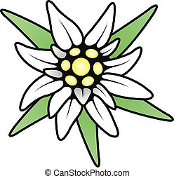 alpino, edelweiss