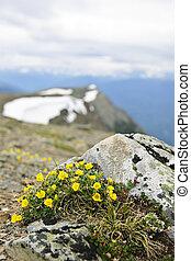 alpino, prato, in, jasper parco nazionale