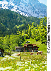 Alps background - Country side field with tree, snow cap...