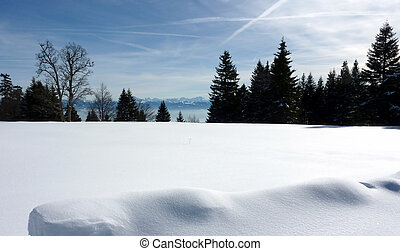Alps behind fir trees by winter