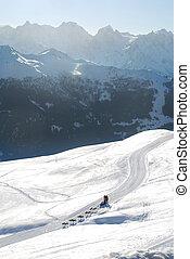 alps, hund sled