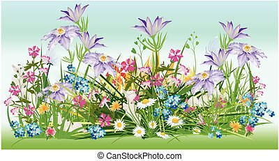 already spring - composition with colorful, blooming flowers...