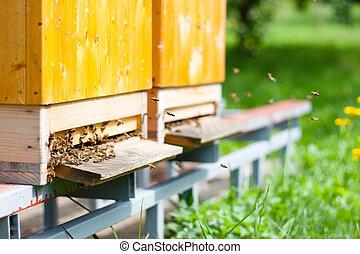 alrededor, su, vuelo, miel, colmena, abejas, enjambrando