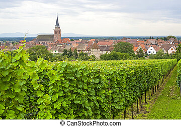 (alsace), panorama, -, bergheim, weinberg
