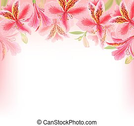 Alstroemeria background flower. Eps10 format